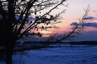 resize北海道の夕日と樹木.jpg