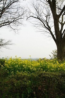 resize菜の花と木.jpg